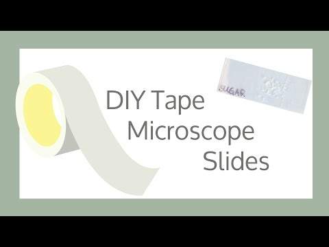 DIY Tape Microscope Slides