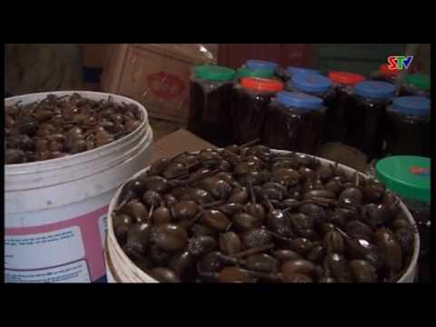 Công an huyện Phù Yên bắt quả tang một vụ tàng trữ trái phép quả, cây nhựa thuốc phiện