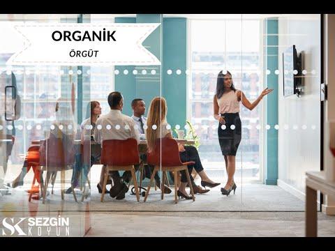Mekanik ve Organik Örgüt Nedir? Avantajları ve Özellikleri