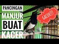 Pancingan Manjur Buat Kacer Biar Ikut Gacor  Asli  Mp3 - Mp4 Download