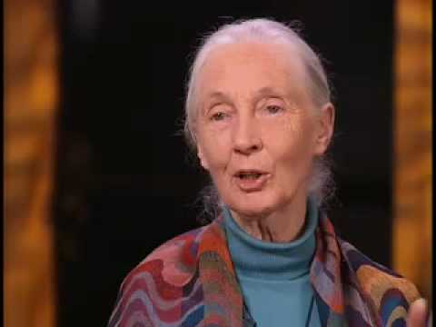 Jane Goodall On Role Zoos Play In Saving Wild Animals