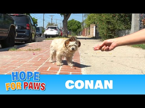 Conan lived on the street and wouldn't surrender to me until I offered him a cheeseburger.
