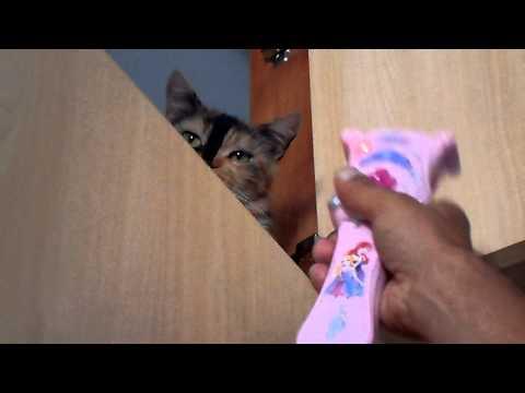 Cat; Closet & Karaoke Star