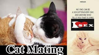Video Sphynx Cats Mating And Giving kitties In My Home download MP3, 3GP, MP4, WEBM, AVI, FLV November 2017