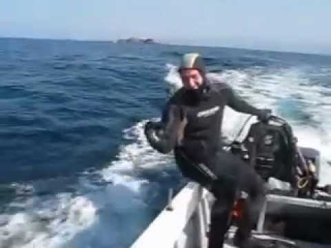 rencontre avec les dauphins 2 l'ile plane, bousfer plage oran