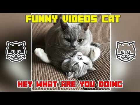 Funny Cat Video Compilation 2019 Try Not To Laugh Challenge 2019 Best videos funny cats #10
