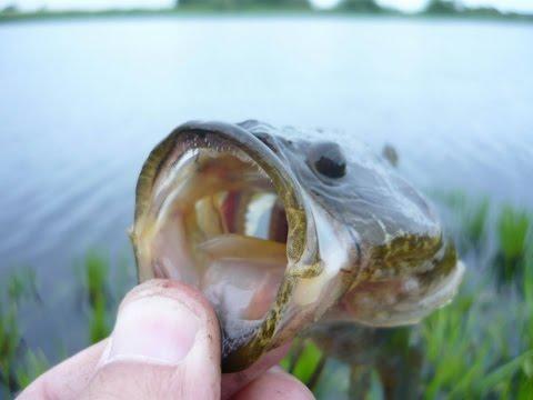 поплавочная удочка для ловли ротана