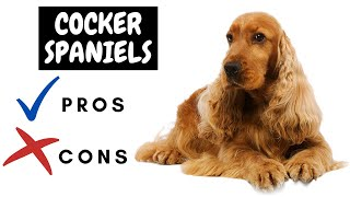 Cocker Spaniel Pros And Cons | The Good AND The Bad!!