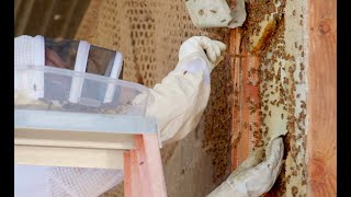Way to Bee - FULL EPISODE - American Grown: My Job Depends on Ag