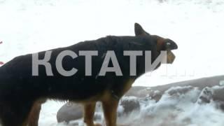 Современная скульптура венгерского авангардиста превратилась в гигантскую собачью будку