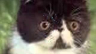 Baby Animal Tribute Thumbnail