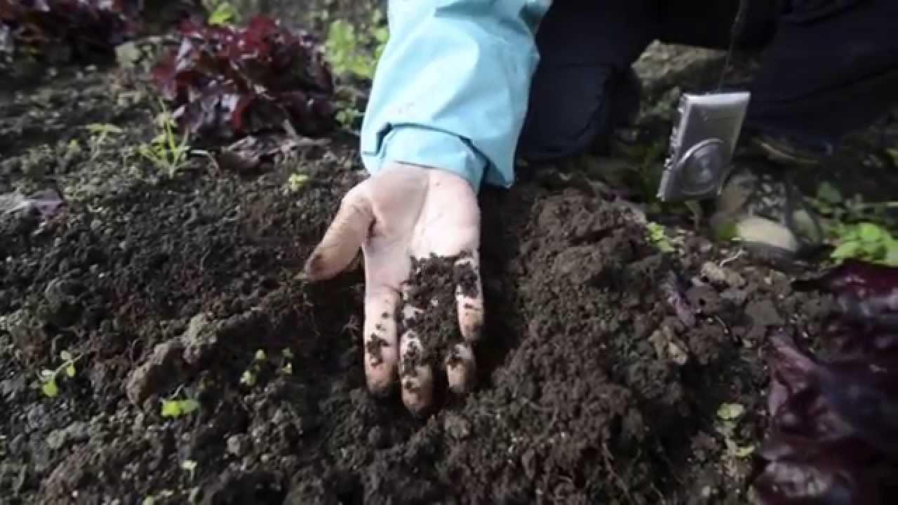 Agricultura Orgánica En Costa Rica Youtube