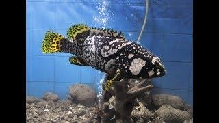 Marine Aquarium and Regional Centre in digha(west bengal)india