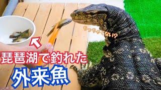 まっすーさんのチャンネル https://www.youtube.com/channel/UCHMn_SNvX...