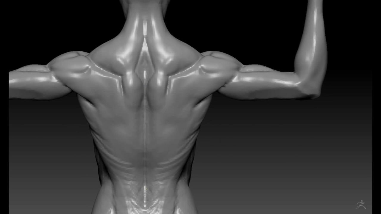 Female Anatomy Flex Sketch Zbrush Youtube