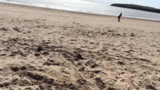 Video Little girl chased by seagulls lol download MP3, 3GP, MP4, WEBM, AVI, FLV November 2017