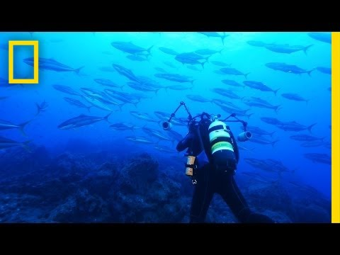 Announcement: Chile Creates Enormous Ocean Preserve | National Geographic