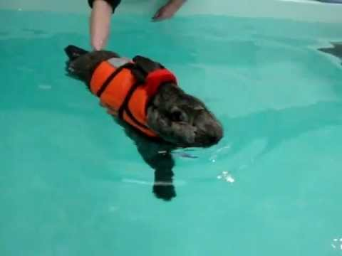 rabbit hydrotherapy heidi bunny 7th swimming session part 2 middle