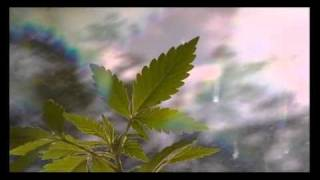 Medical Cannabis in the UK - BBC Inside Out