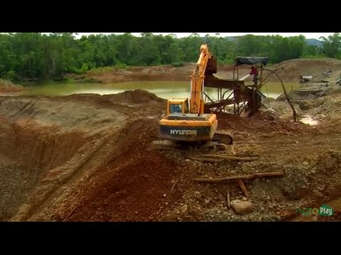 Eco-Rehabilitation of Biodiversity in Forest Destroyed by Gold Miners - TvAgro by Juan Gonzalo Angel