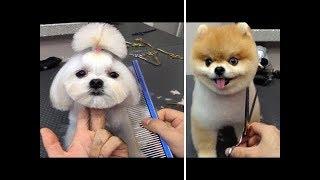 可愛くて見ることになる犬と猫美容師遊び神技・スゴ技まとめました!