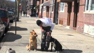 Pit Bull Terrier Aggression - Dctk9 Customer Testimonial - Part 1