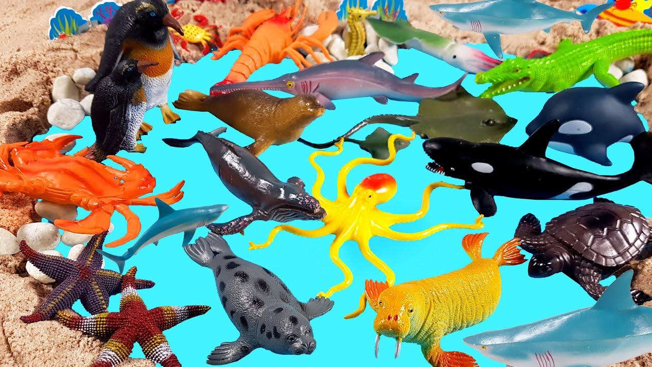 바다에는 어떤 동물들이 살까요?  바다에 사는 동물 이름 배우기