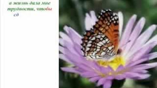 Урок бабочки. Как стать финансово Свободным?