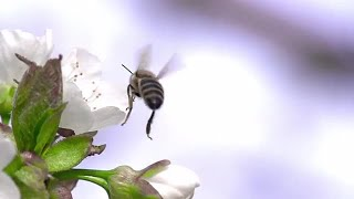 Bee Stock Video