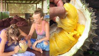 All You Can Eat MUSANG KING Durian Buffet