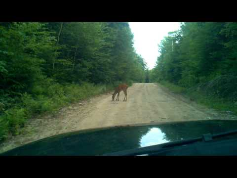 Angry Deer on the Sodom rd. Buckfield Maine.