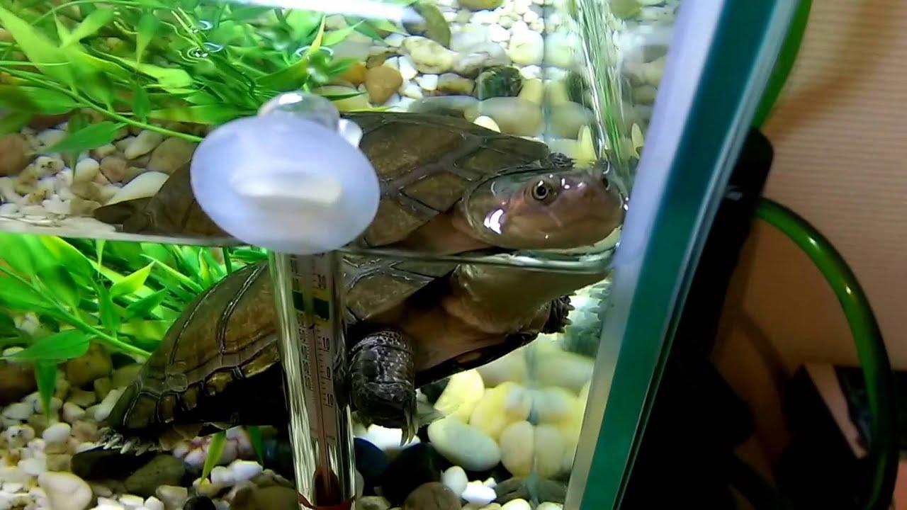 Test aquarium tortue filtre eheim 150 youtube for Filtre aquarium tortue