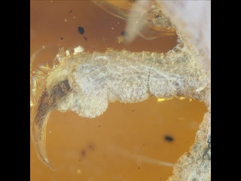 Bird preserved in amber for 100 million years