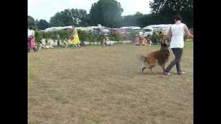 20150718 - Demo Doggydance Camping Houtum - Katty en Lex