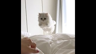 Котики и милые котята. Приколы с котами. Видео про котят.