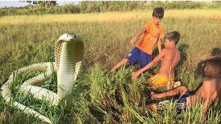 Дети ловят водных змей руками