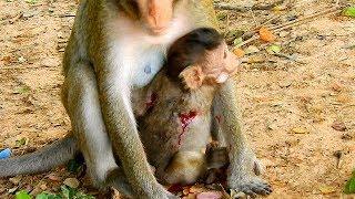 Baby Lizza was bitten by Big Male Monkey