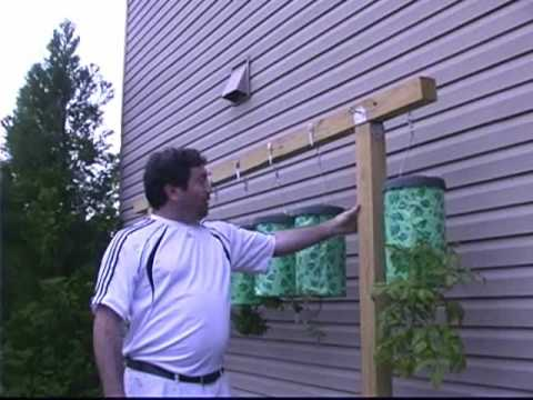 Topsy Turvy Planter Hanging Tomatoes Youtube