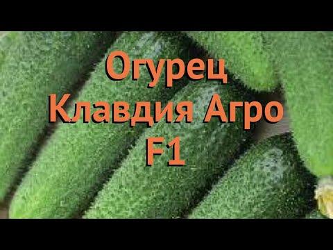 Огурец обыкновенный Клавдия Агро F1 🌿 обзор: как сажать, семена огурца Клавдия Агро F1