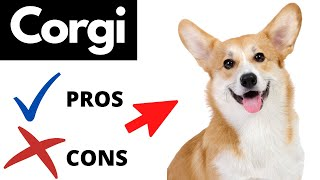Corgi Pros And Cons | The Good AND The Bad!!