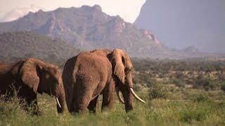Elefanti a rischio, in Cina commercio d