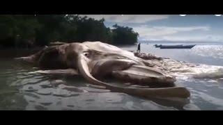 Неизвестное существо, выброшенное на берег