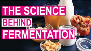 Health benefits of fermented food | why ...