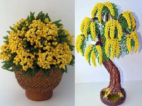 мимоза фото цветы