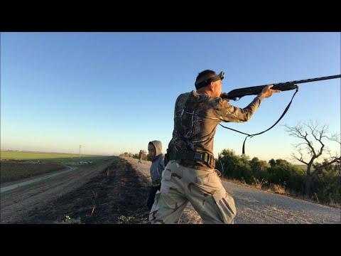 2019 Dove And Mosquito Hunting At Knights Landing