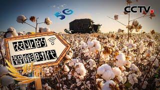 应用智能化农机的农民收益如何?智能农业的未来将是哪般景象?「对话」20210403 | CCTV财经 - YouTube