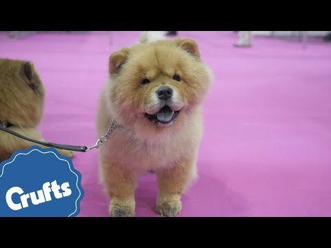 Come to Discover Dogs 2017! Meet over 200 breeds of dog!