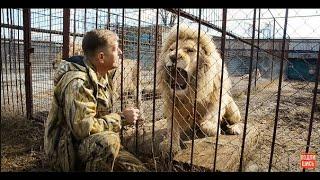 видео Белый лев