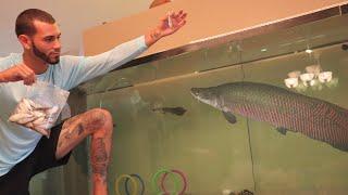Feeding All Of My Fish!