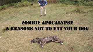 Zombie Apocalypse Dog Defense
